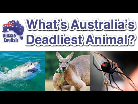 What's Australia's Deadliest Animal?   Aussie Culture   Learn Australian English