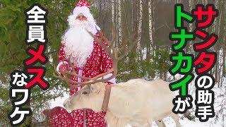 クリスマスにプレゼントを配るサンタクロース。彼らのソリを引く優秀な...