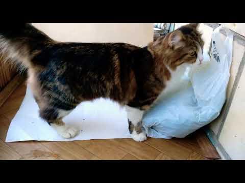 Трава в рационе кошек