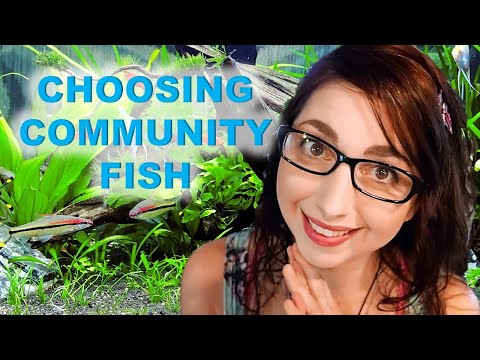 How To Choose Community Fish For Your Aquarium   Starting A Community Fish Tank