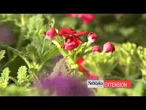 Buying The Best Flowers At The Garden Center Youtube