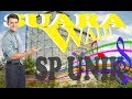 Suara Walet Sp Unik  Mp3 - Mp4 Download