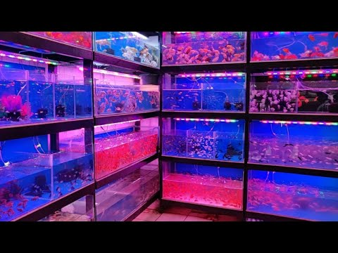 Abhi Aquarium Fish Shop Kurla Fish Market