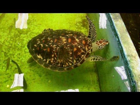 Visiting A Salt Water Fish Farm In Krabi, Thailand | HD Video