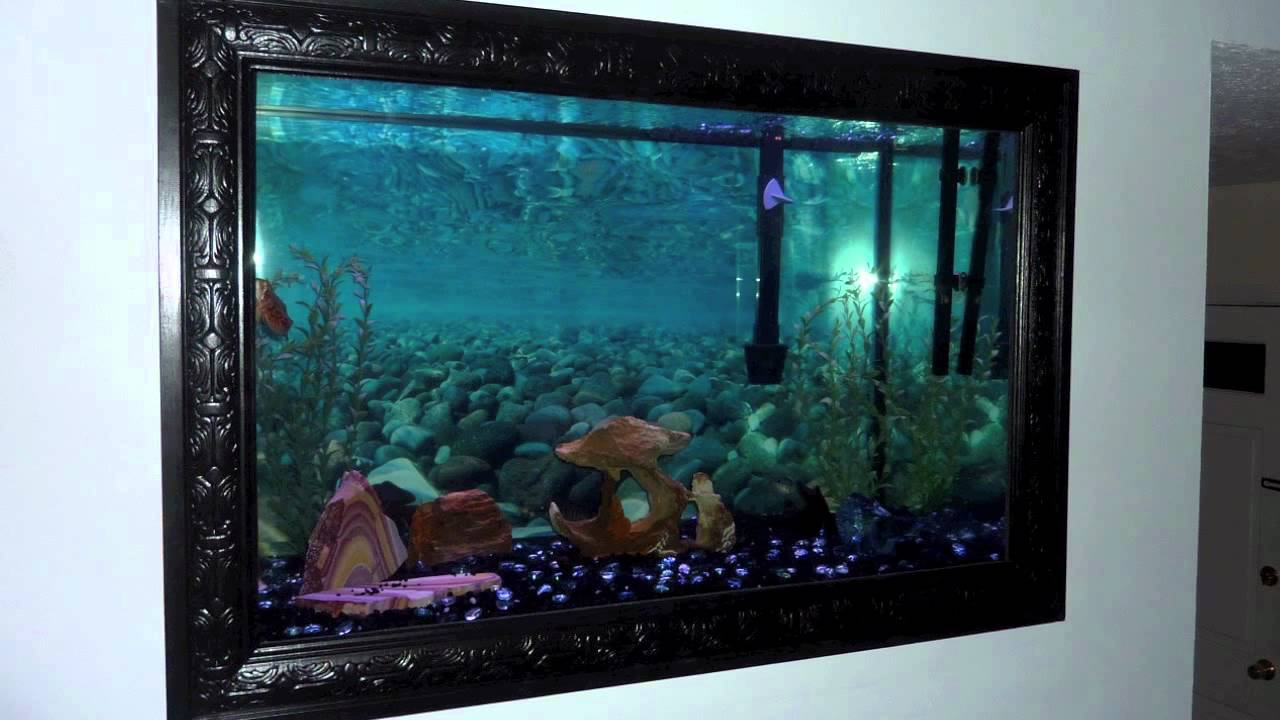 Leslie Jr In Wall Aquarium Project Youtube