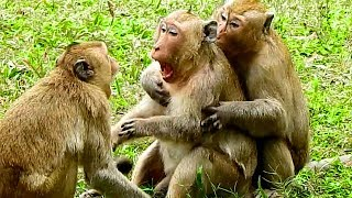 First Time Seeing King Kong, Donkey & His Colleague Doing Like This, They Are Honest Each Other