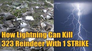 How FREAK Lightning Killed 323 Reindeer With ONE Strike
