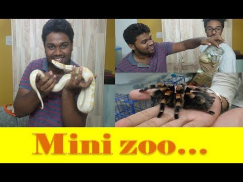 Mini Zoo at home | Wild vlog (INDIA ) | ft. ASHTAG Lifestyle