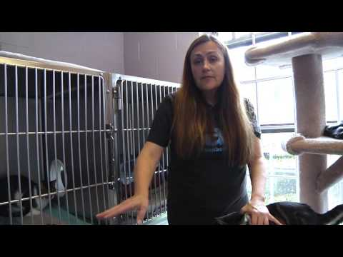 Tip Tuesdays: Introducing A Cat To A Resident Cat