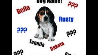 Top 20 Dog And Puppy Names For Male And Female.