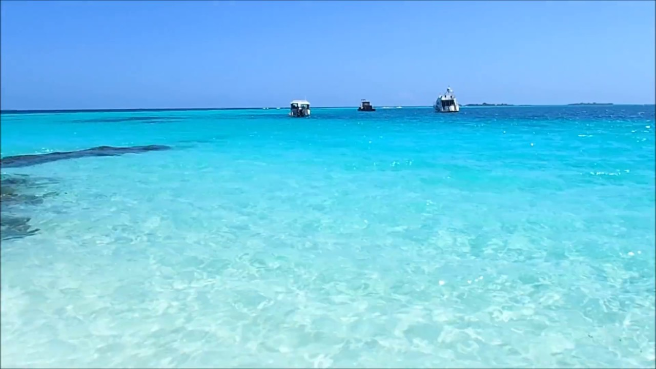 Maldives Private Beach Shark June 2016