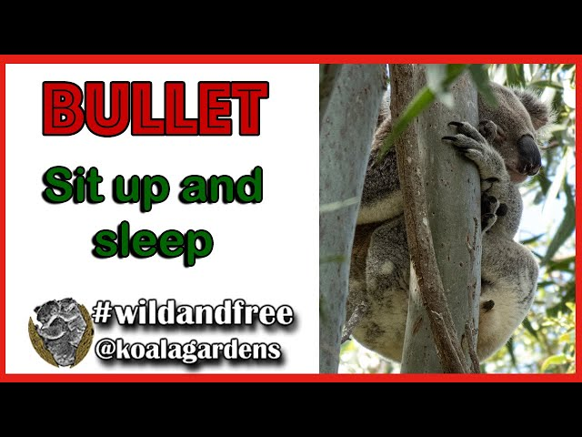 Bullet - some relaxing sit up and sleep video