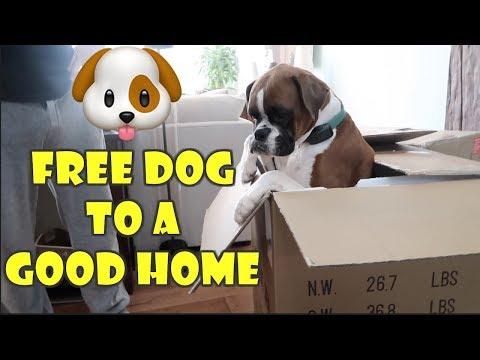 FREE DOG TO A GOOD HOME 🐶 (WK 359.4)   Bratayley