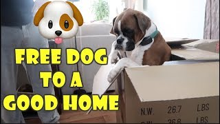 Free Dog to a Good Home 🐶 (WK 359.6) | Bratayley