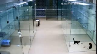 """Наши игрища в гостинице для кошек """"Черный кот"""" в Москве"""