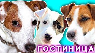 3 СОБАКИ - ОДИН ДЕНЬ В ГОСТИНИЦЕ ДЛЯ СОБАК У ЭЛЛИ ДИ | Elli Di Pets