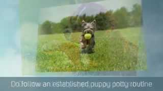German Shepherd Puppy Training Tips | Puppy Potty Training Tips | Crate | Toilet