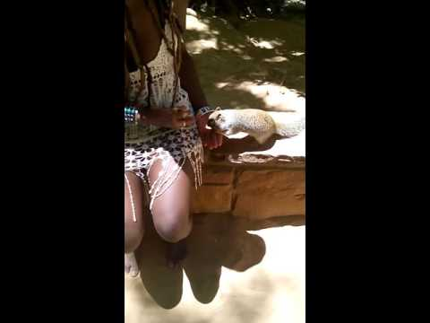 Sexy Jamaican and friendly Grand Canyon squirrel