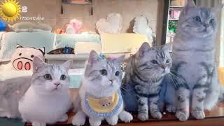 재미있고 귀여운 개들과 고양이 및 애완동물 이야기 모음…
