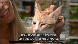 יומן- הצצה אל עולם החתולים. | כאן 11 לשעבר רשות השידור