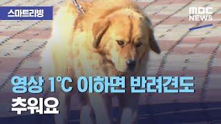 [스마트 리빙] 영상 1℃ 이하면 반려견도 추워요 (2021.01.22/뉴스투데이/MBC)