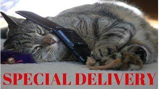 Talking Kitty Cat - NEW KITTY CAT TALKING