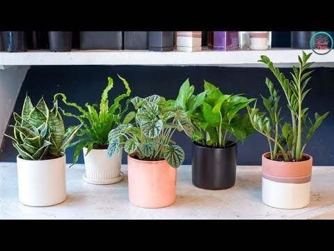 best-air-filtering-house-plants,-according-to-nasa