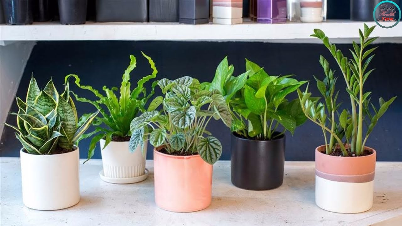 Best Air Filtering House Plants According To Nasa