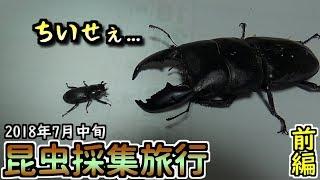 【カブトムシ・クワガタ】 昆虫採集旅行 2018年7月中旬 前編 「小さいの飛んできた」 thumbnail