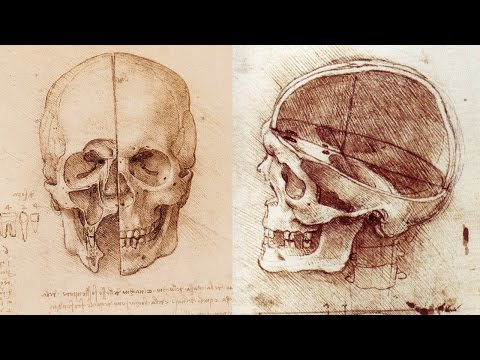 How to Draw a Skull - Anatomy Master Class