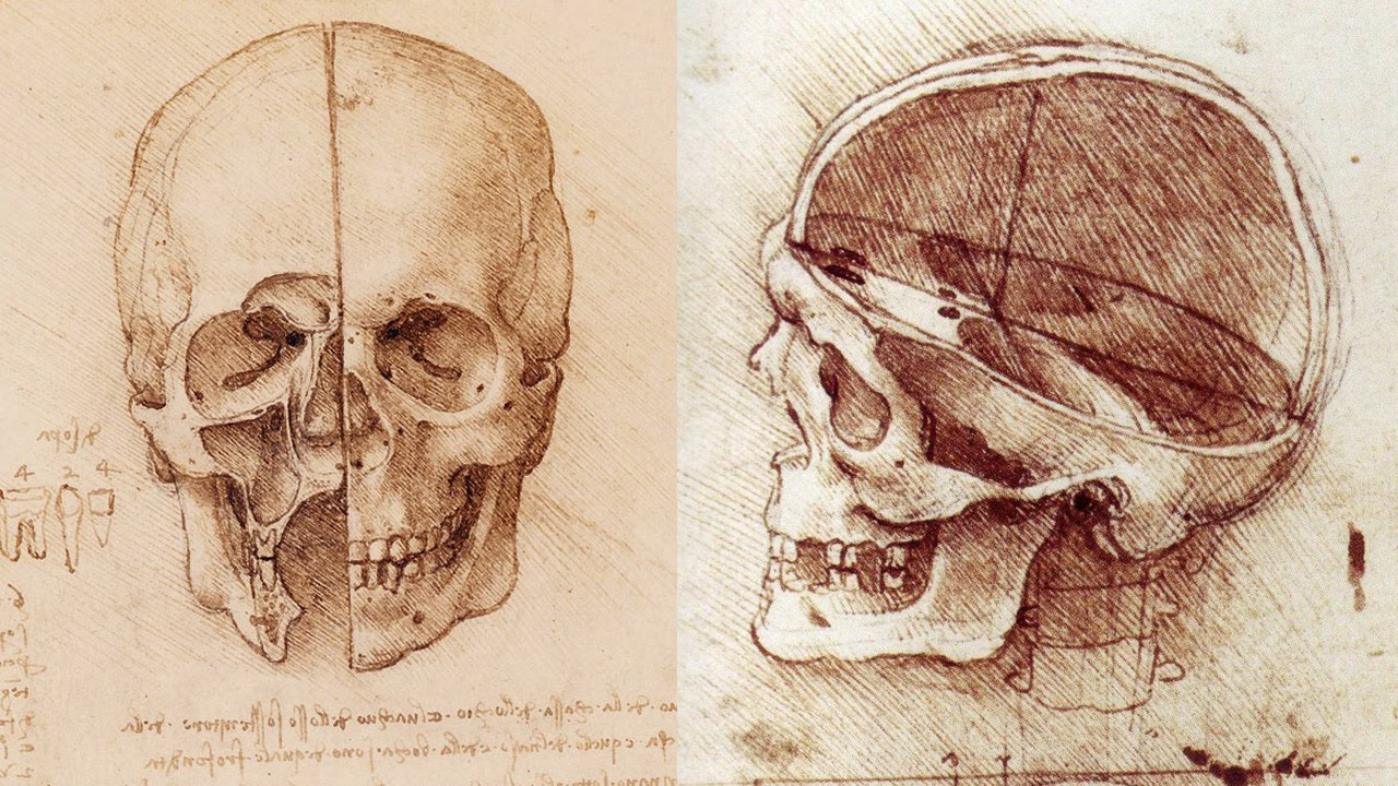 How to Draw a Skull - Anatomy Master Class - YouTube