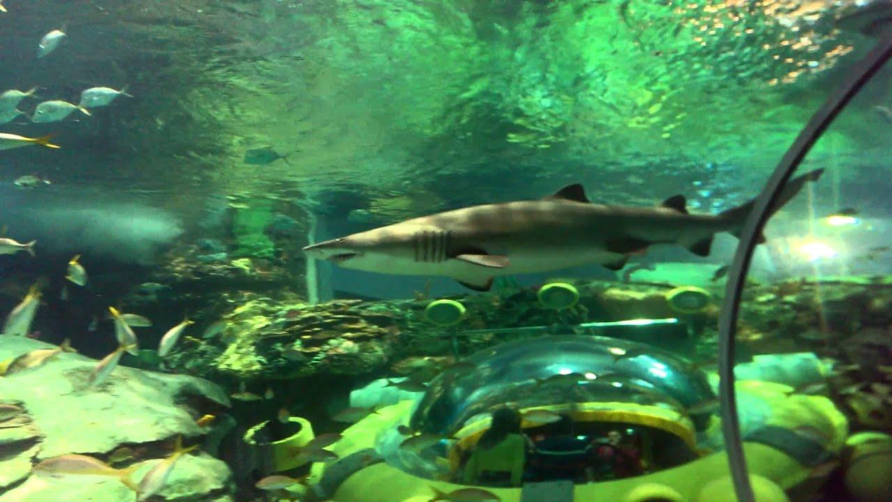 Fish in ripleys aquarium - Dangerous Lagoon Underwater Tunnel At Ripley S Aquarium Toronto Youtube