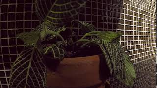 Plant Recovery Time Lapse