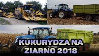 Kukurydza na ziarno 2018.Na dwa kombajny. 4xNH, JCB, 6xPrzyczep.