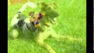 Dog Kennels Kent