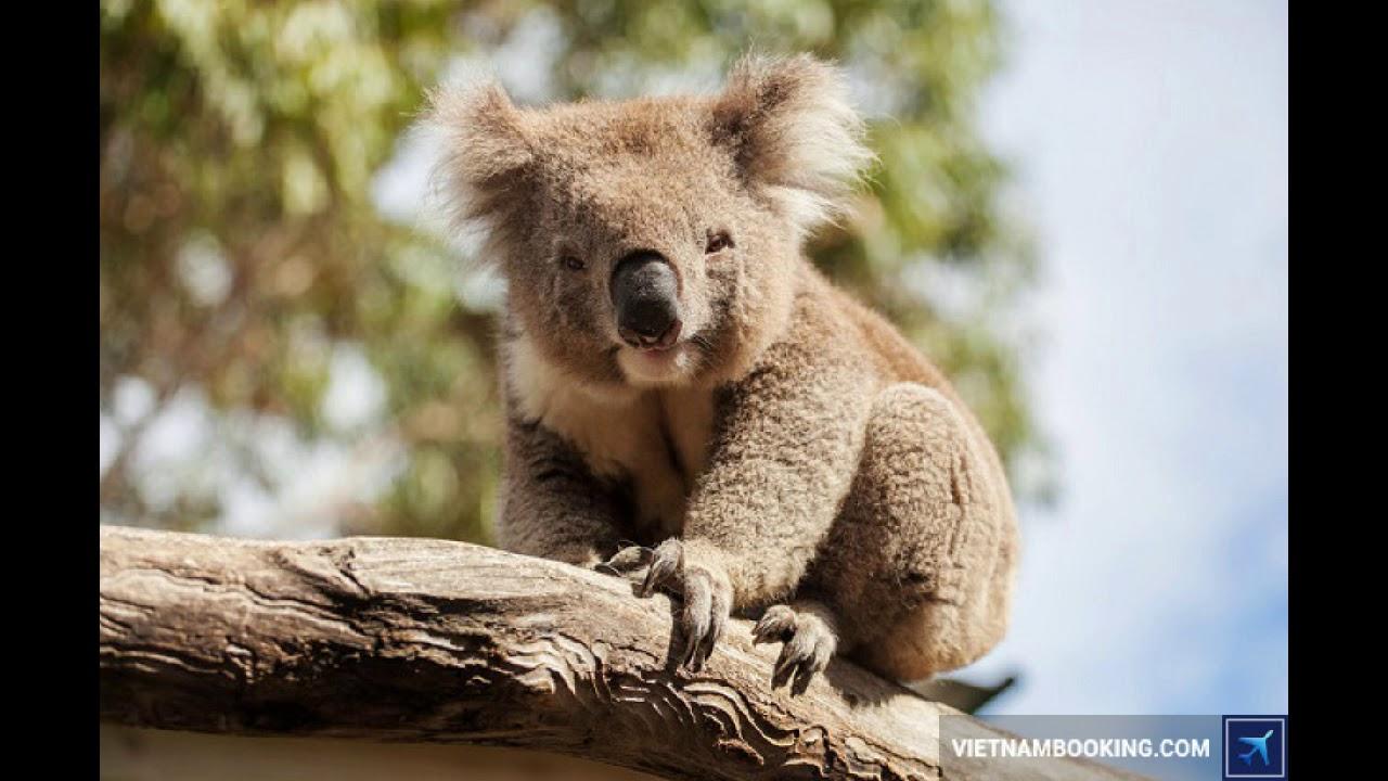 Bay ngay Melbourne, Úc với vé máy bay giá rẻ