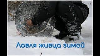 Рыбалка зимой на морду (верша)/Ловля живца зимой
