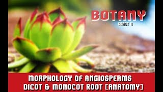 Morphology Of Angiosperms  | Dicot & Monocot Root [Anatomy] | Overview | Section 6