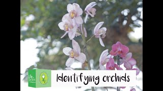 How to identify orchids