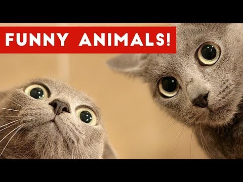 Funniest Cute Pets & Animals Bloopers of 2016 Weekly Compilation   Funny Pet Videos