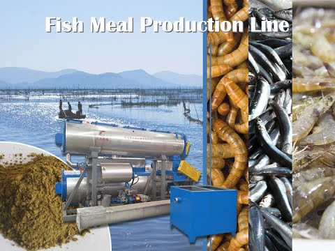 Fish Meal Production Process | Chile Fish Powder Production Line | Fishmeal Plant Manufacturer