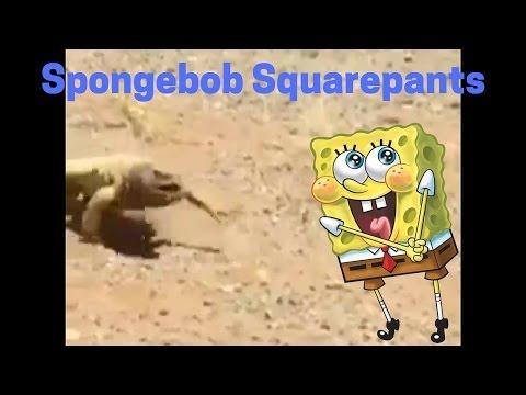 Hot Saudi Arabia lizard | SpongeBob Dub