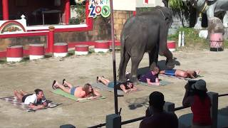 Шоу слонов в Тайланде #тайланд #шоу