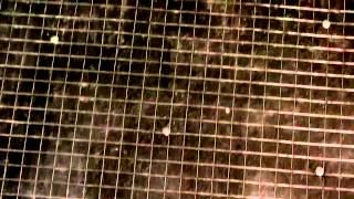 Как положить плитку на деревянный пол в бане(Инструкция, как положить плитку в бане http://proplitki.ru/bez-rubriki/plitka-v-bane.html., 2015-08-27T11:02:54.000Z)