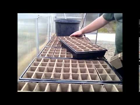 Diy Planting Vegetable Veggie Seeds Germinating In The Green House Greenhouse