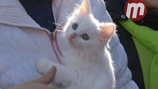 Раздача котят