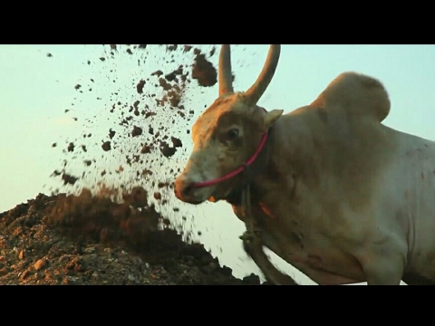 MARABU -Tamil Hip HopAlbum [Jallikattu]