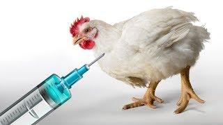 এই তথ্য জানলে আপনি হয়তো আর কখনোই ব্রয়লার মুরগি খাবেন না why we should not eat broiler chickens ?