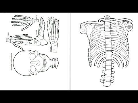 Iskelet Sistemi Modeli Nasıl Yapılır Youtube
