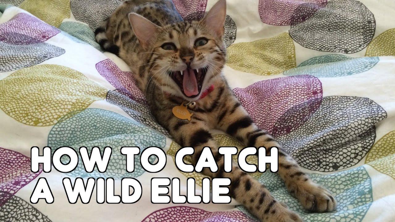 How to catch a wild Ellie
